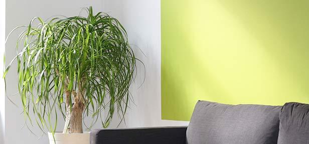 grüne schlafzimmerfarbe