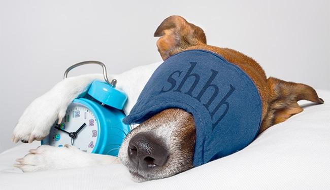 orthopädische kissen für hunde im test