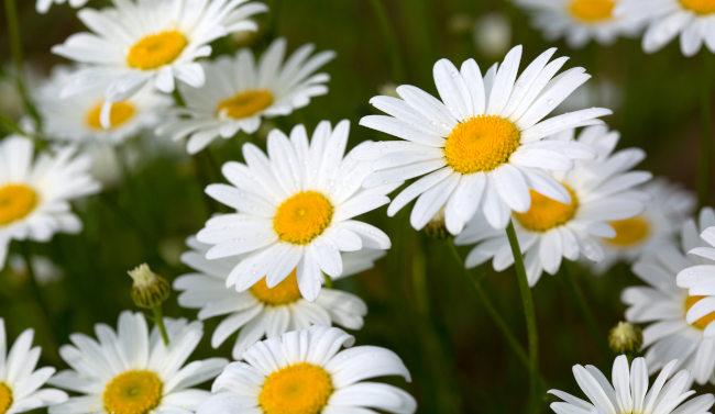 wildblumen fürs schlafzimmer geeignet