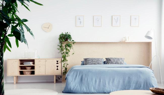 Gesunde pflanzen für schlafzimmer